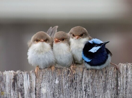 Angry birds?