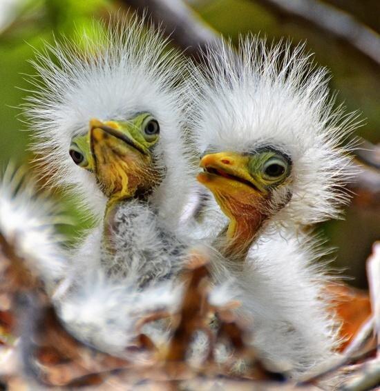 fuzzy baby birds