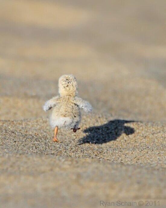 hot sand hot sand
