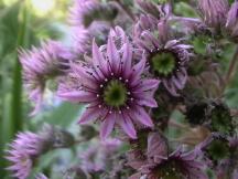 Lenore's Flowers