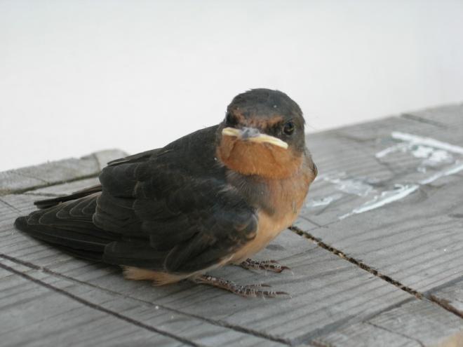 bird, etc back up 056