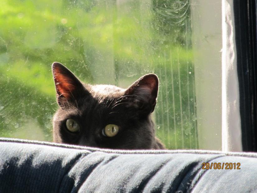 My Zorro story posted on Katzenworld thismorning-1/27/19