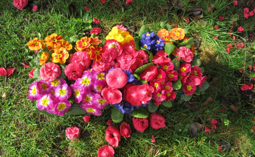 Cee's FOTD (Flower of the Day)Primrose