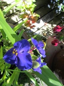 Deck Garden 7