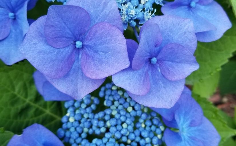 Friday Flowers 9/27/19