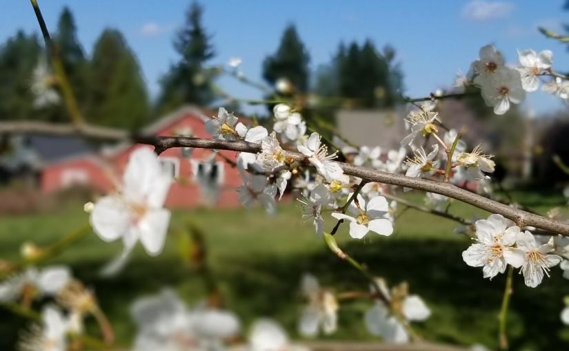 Breaking news:  Spring comesanyway….